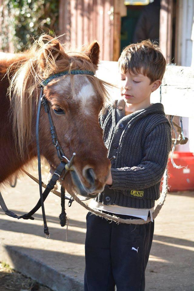 poneys 5